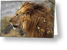 Large Male Lion Emerging From The Bush Greeting Card