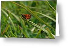 Large Skipper Butterfly Greeting Card