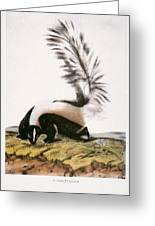 Large Tailed Skunk Greeting Card