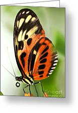 Large Tiger Butterfly Greeting Card