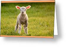 Larry Lamb And His Lovely Pink Ears. Greeting Card