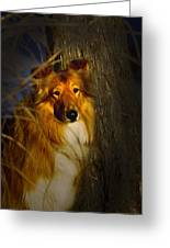 Lassie Lookalike Greeting Card