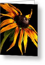 Last Day Of A Black-eyed Susan Greeting Card