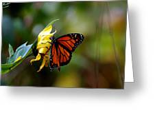 Last Kiss Of The Butterfly Greeting Card