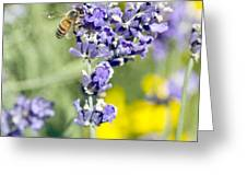 Last Of The Lavender Greeting Card