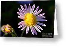 Last Ray Of Sun Greeting Card
