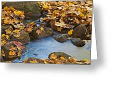 Last Signs Of Autumn 0438 Greeting Card