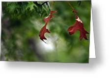 Last To Fall Greeting Card