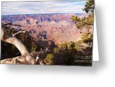 Late Afternoon At The South Rim Greeting Card