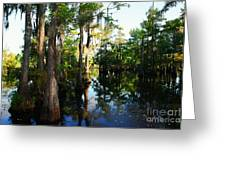 Late Afternoon At The Swamp Greeting Card