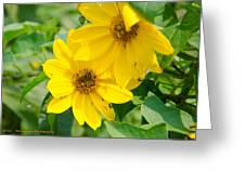 Late Summer Blooms Greeting Card by Dan Crosby