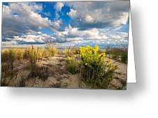 Late Summer Dunes Ocean City Greeting Card