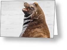 Laughing Sea Lion Greeting Card
