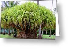 Lauhala Tree Greeting Card