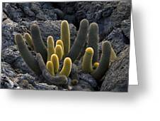 Lava Cactus (brachycereus Nesioticus) Greeting Card