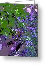 Lavender 2 Greeting Card