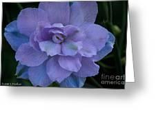 Lavender Blue Greeting Card