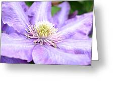 Lavender Clematis Flower Greeting Card