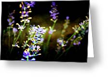 Lavender Dream Greeting Card