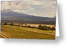 Lavender Farm Panorama Greeting Card