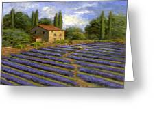 Lavender Fields In The Sun Greeting Card