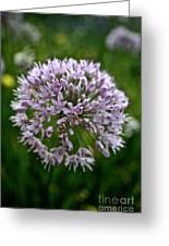 Lavender Globe Lily Greeting Card