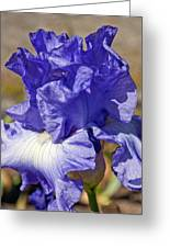 lavender Iris Greeting Card