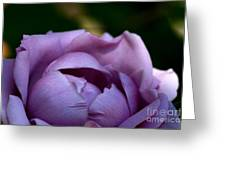 Lavender Morning Greeting Card