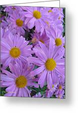 Lavender Mum Bouquets Greeting Card