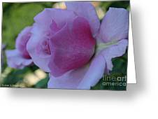 Lavender Roses Greeting Card