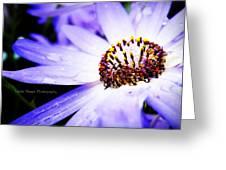 Lavender Senetti Greeting Card by Lessie Heape