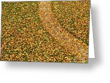 Lawn Covered With Fallen Leaves Greeting Card