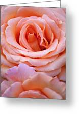 Layers Of Pink Petals Greeting Card