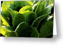 Layers Of Romaine Greeting Card