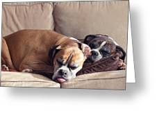 Lazy Boxers Greeting Card