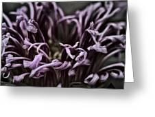 Lazy Flower Greeting Card by Gabriel Calahorra