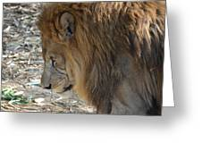 Le Lion Greeting Card