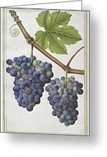 Le Moyne: Grape Vine, C1585 Greeting Card