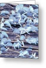 Lead Oxide Crystals On Lead, Sem Greeting Card by Dr Kari Lounatmaa