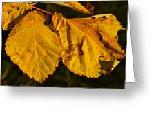 Leaf 3 Greeting Card