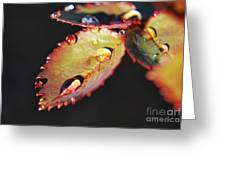 Leaf And Dew Drops Greeting Card
