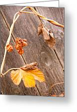 Leaf And Old Wood Fence Greeting Card