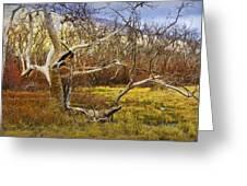 Leaf Barren White Tree Trunk In California No.1500 Greeting Card
