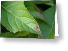 Leaf Blemish Greeting Card