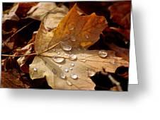 Leaf Doplets Greeting Card by LeeAnn McLaneGoetz McLaneGoetzStudioLLCcom