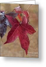 Leaf In Red Greeting Card