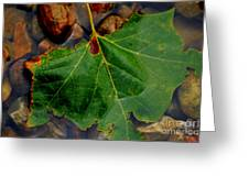 Leaf In The River Greeting Card