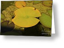 Leaf On A Pond Greeting Card