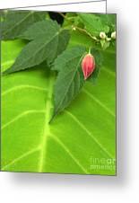 Leaf On Leaf With Red Bud Greeting Card