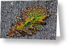 Leaf On The Sidewalk Greeting Card by Robert Ullmann